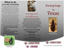 Click to download brochure about the Kissing Bug published by Texas A&M University.